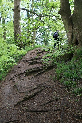 Natural woodland steps