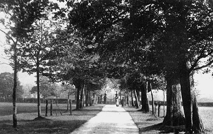 The drive to Marple Hall, now Marple Hall Drive