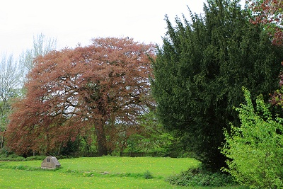 Site of Marple Hall today - The Yew Tree remains